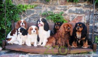 Питомник собак Royal Delight