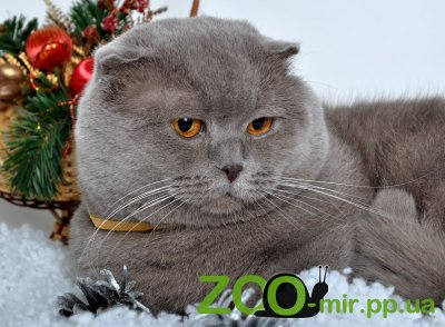 Питомник кошек Kitten Paw