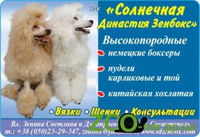 Питомник собак «Солнечная династия зенбокс»