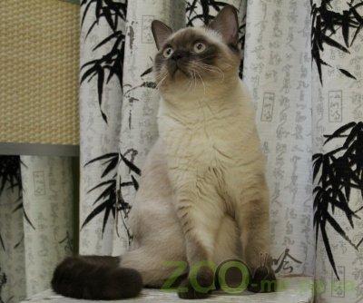 Питомник кошек JuliVal