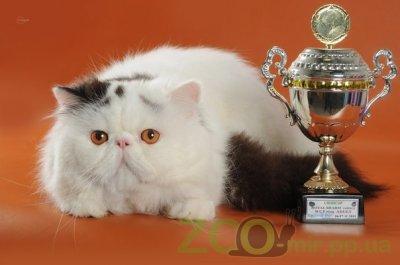Питомник кошек Sappho